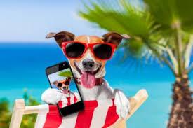 Cani in Spiaggia a Numana