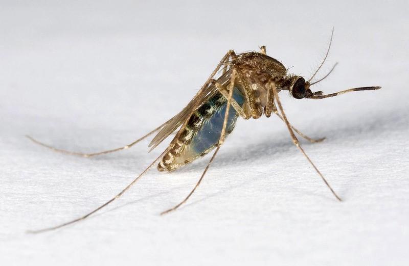 Consigli utili per difendersi dalle zanzare